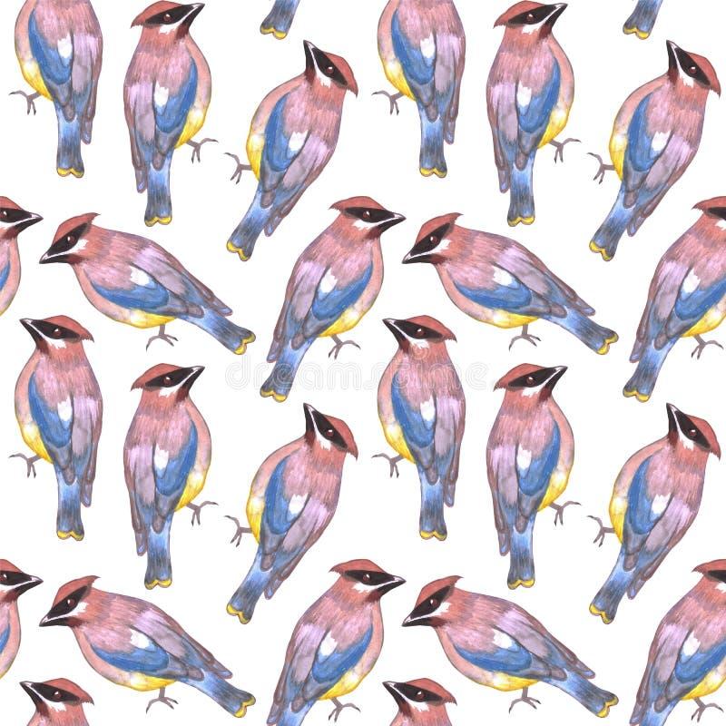 Cedar waxwing or Bombycilla cedrorum bird seamless watercolor birds painting background.  stock illustration