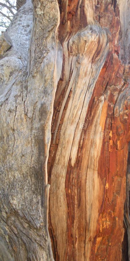 Cedar Wood Detail, Libanonzeder lizenzfreies stockfoto