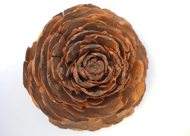 Cedar Wood Rose Cone arkivfoton