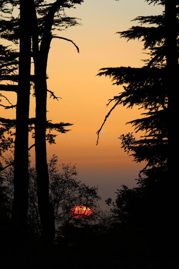 Cedars Sunset, Lebanon stock image