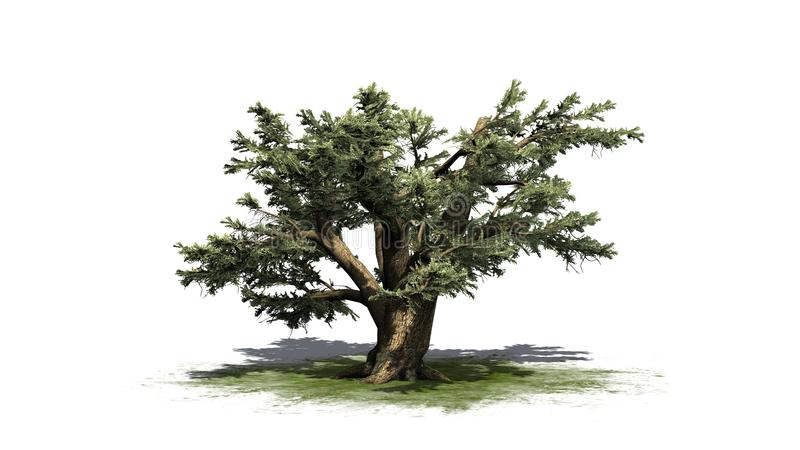 Ceder van de boom van Libanon stock illustratie
