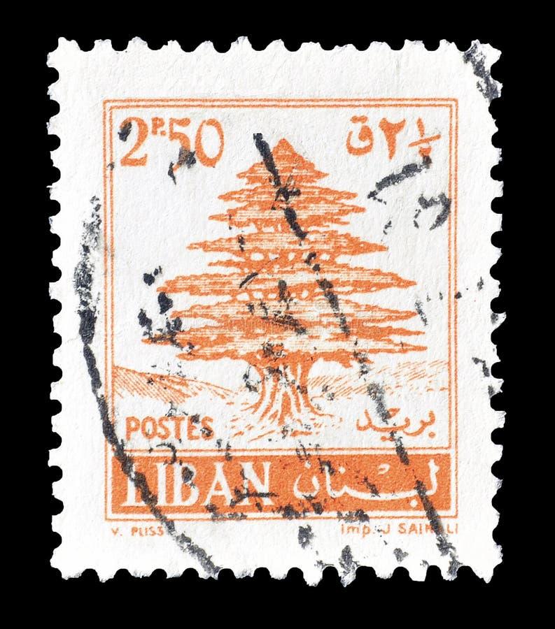 Cederträträd på portostämpel royaltyfria foton