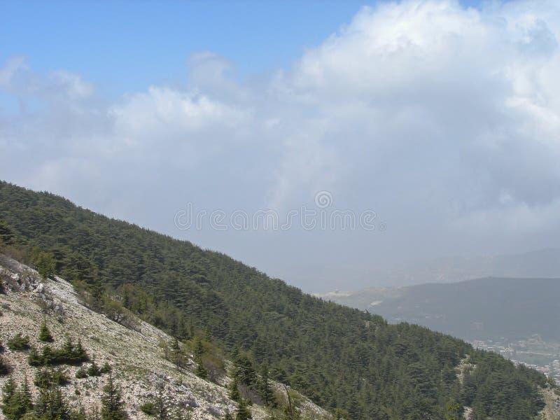 Cedr rezerwa w Liban podczas wiosny fotografia stock