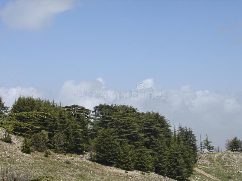 Cedr rezerwa w Liban podczas wiosny zdjęcia royalty free