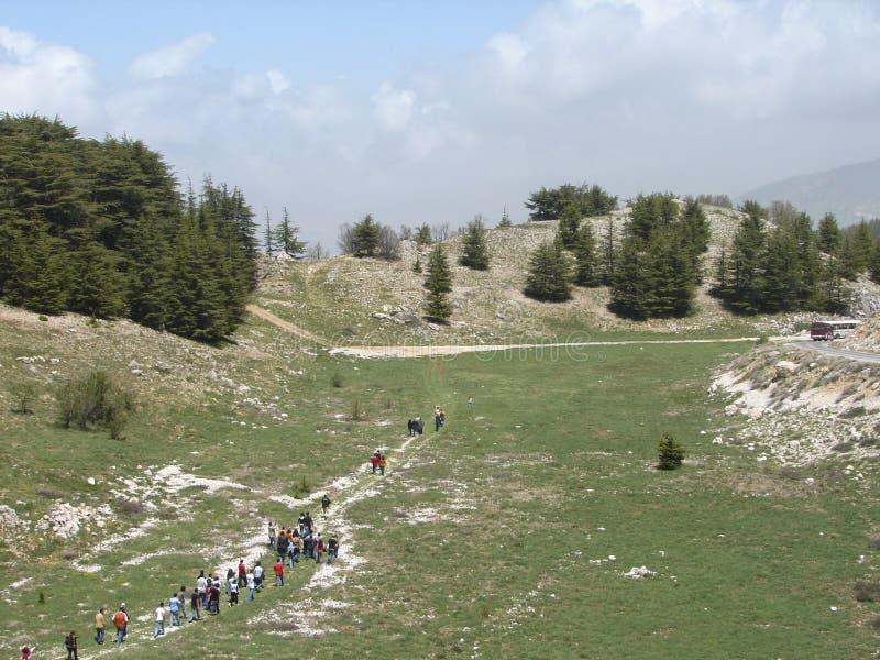 Cedr rezerwa w Liban podczas wiosny zdjęcia stock