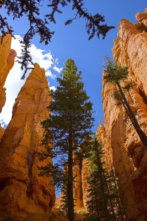 Cedri delle montagne rosse fotografie stock