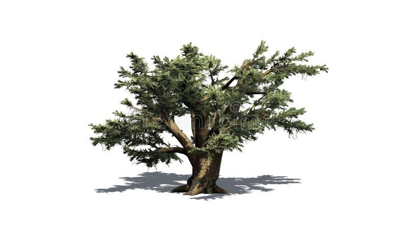 Cedro da árvore de Líbano ilustração do vetor