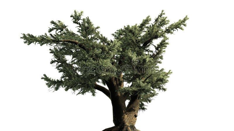 Cedro da árvore de Líbano ilustração royalty free
