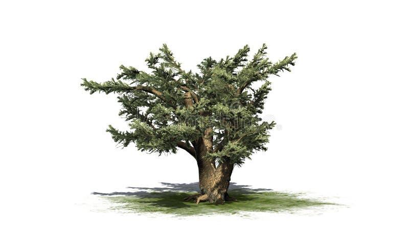Cedro da árvore de Líbano ilustração stock