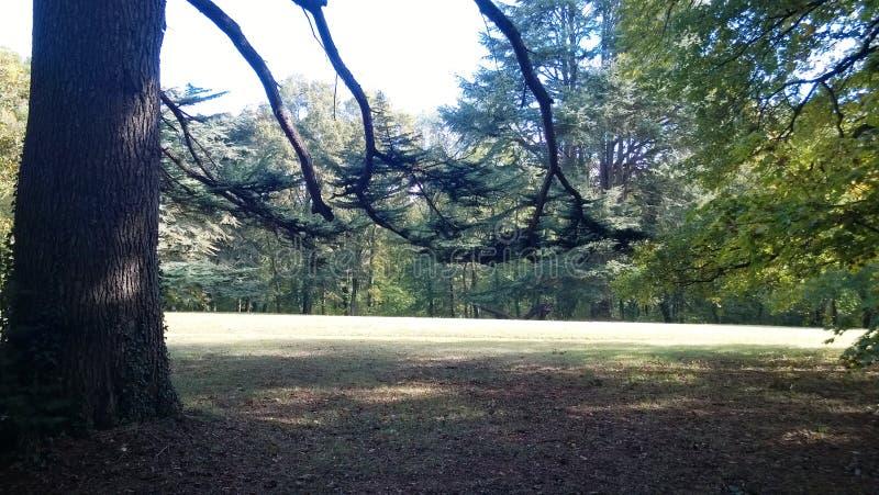 Cedro del Libano maestoso in un parco in Touraine fotografie stock libere da diritti