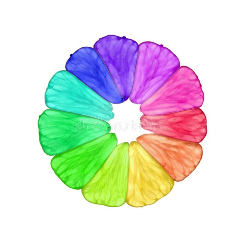 Cedro del Rainbow royalty illustrazione gratis