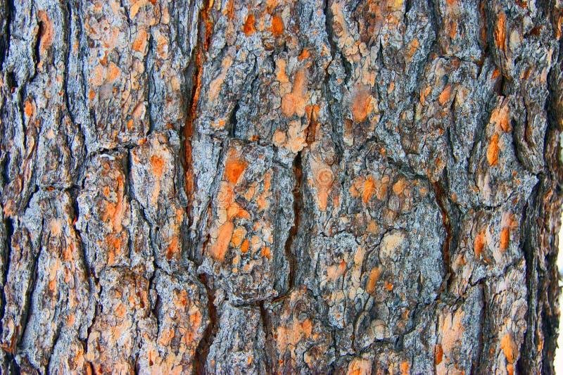 Download Cedro Dell'albero Della Corteccia Immagine Stock - Immagine di macro, modello: 30829815