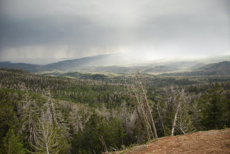 Cedrowy przerw Ramparts ślad - deszcz obrazy royalty free