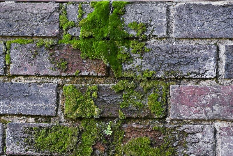 cegły zakrywali zielonego przesłodzonego mech obraz stock