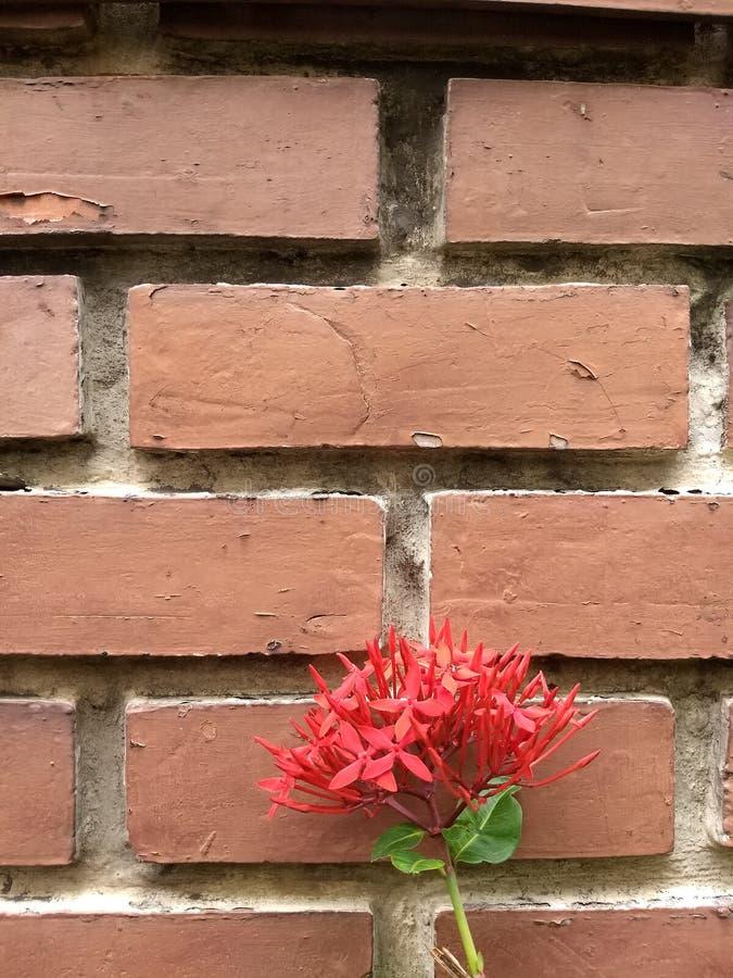 ceglana ściana stara czerwieni zdjęcie royalty free