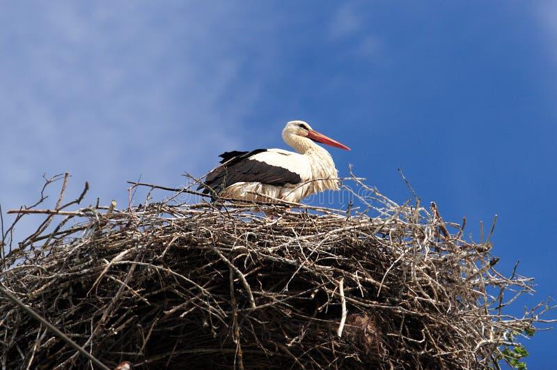 Download Cegonha foto de stock. Imagem de pássaro, filial, ornithology - 12800252