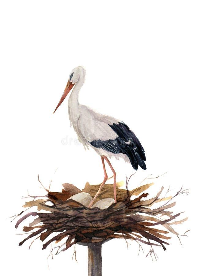 Cegonha branca da aquarela nos ovos de choque do ninho Ilustração do pássaro do Ciconia isolada no fundo branco Para o projeto ilustração stock