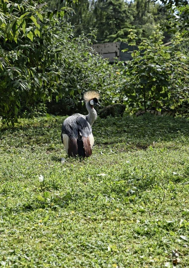Cegonha de Maribo no jardim do pássaro na casa de campo bonita perto de Leeds ocidental - yorkshire que não é confiança nacional fotografia de stock