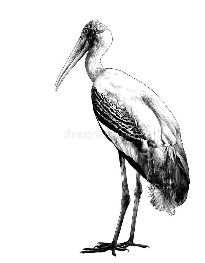 A cegonha do pássaro está na altura completa lateralmente ilustração stock