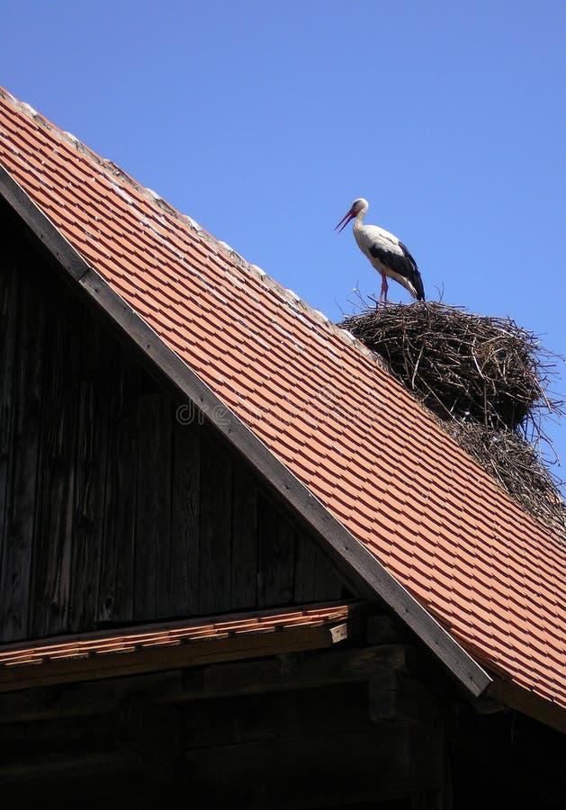 Cegonha no telhado imagem de stock
