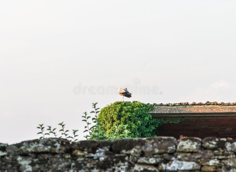 Cegonha relaxada na construção da vila fotografia de stock royalty free