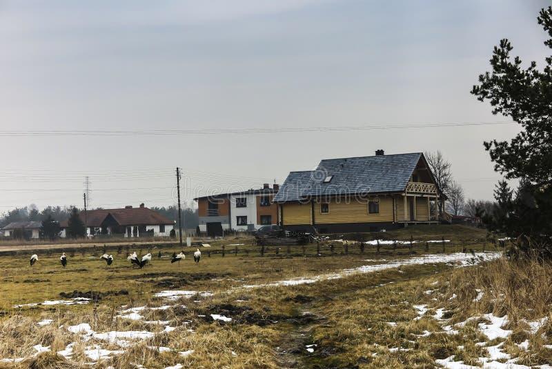 Cegonhas congeladas no prado após o retorno dos países mornos imagem de stock
