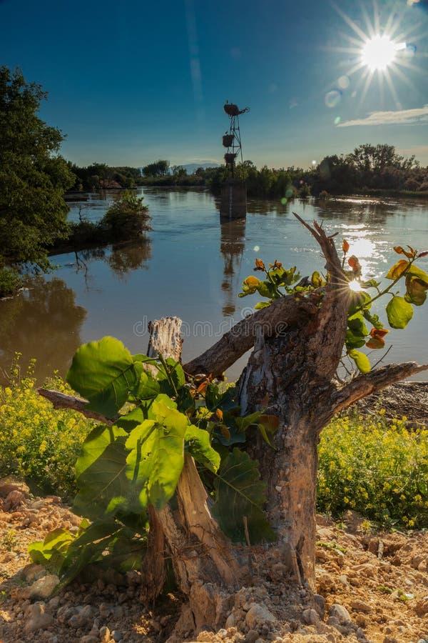 Cegonhas do por do sol & o rio imagens de stock