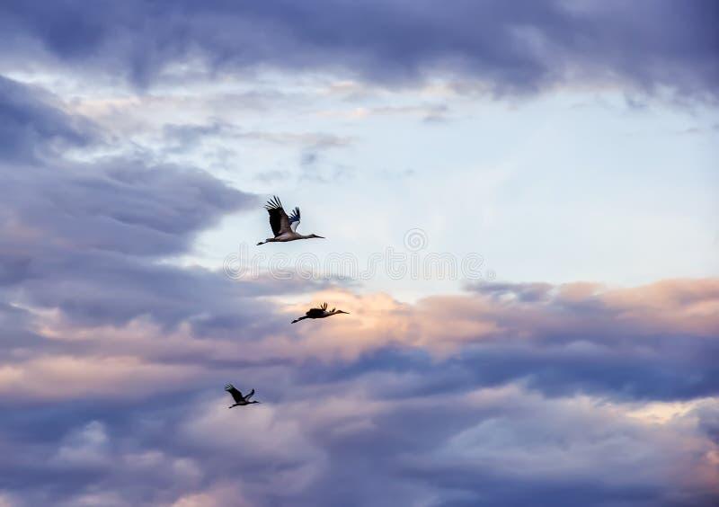 Cegonhas no céu imagem de stock royalty free