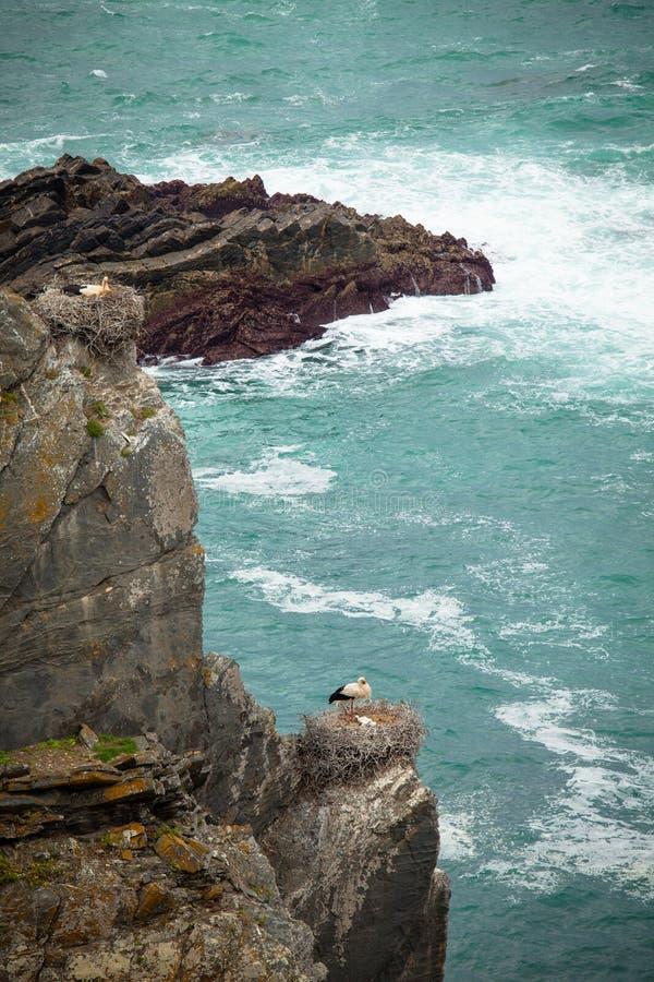 Cegonhas no penhasco Portugal foto de stock royalty free