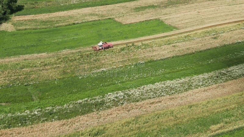 A ceifeira de liga do vintage da vista aérea sega o trigo no campo para a indústria alimentar e o cultivo do negócio agrário fotografia de stock royalty free
