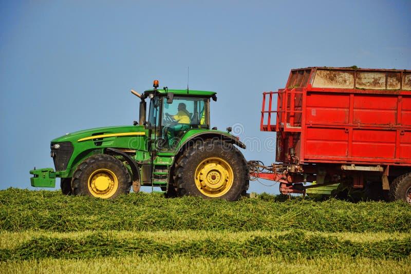 Ceifeira que descarrega em um reboque de trator noun A ceifeira de liga sega o campo Trator de cultivo que recolhe o monte de fen foto de stock