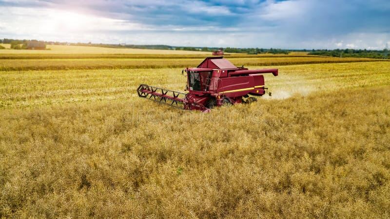 Ceifeira vermelha no centeio de colheita do campo fotografia de stock royalty free