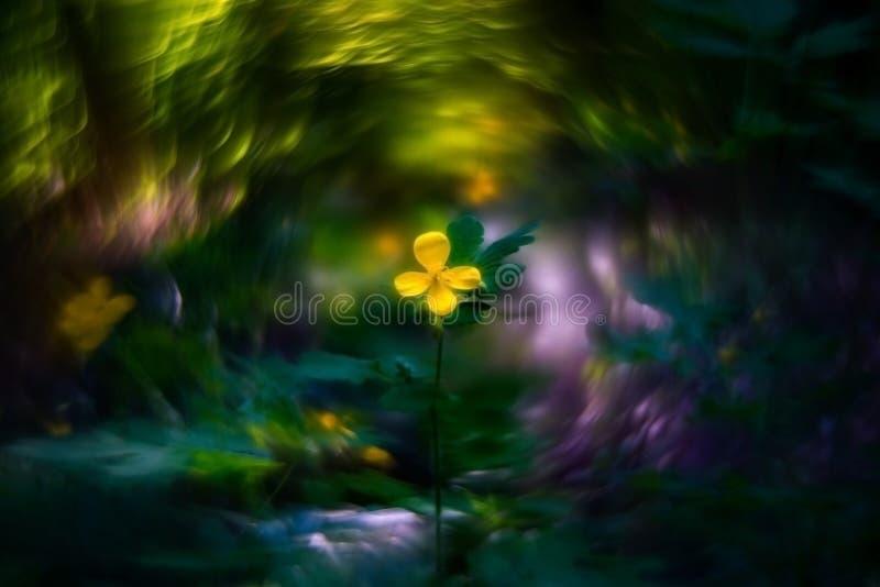 celandine λουλουδιών και bokeh στοκ φωτογραφία