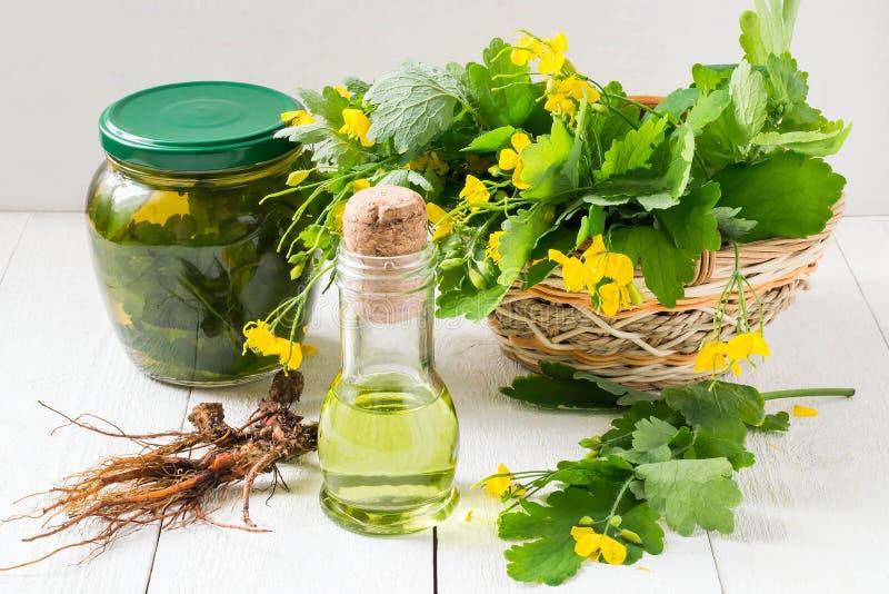 Celandine, масло, тинктура и корни для фитотерапии стоковые фотографии rf