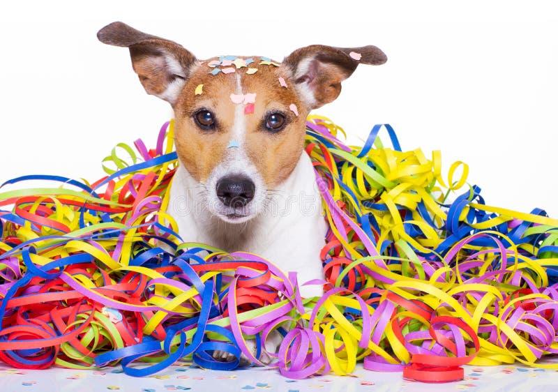 Celeberation del perro del feliz cumpleaños imagen de archivo
