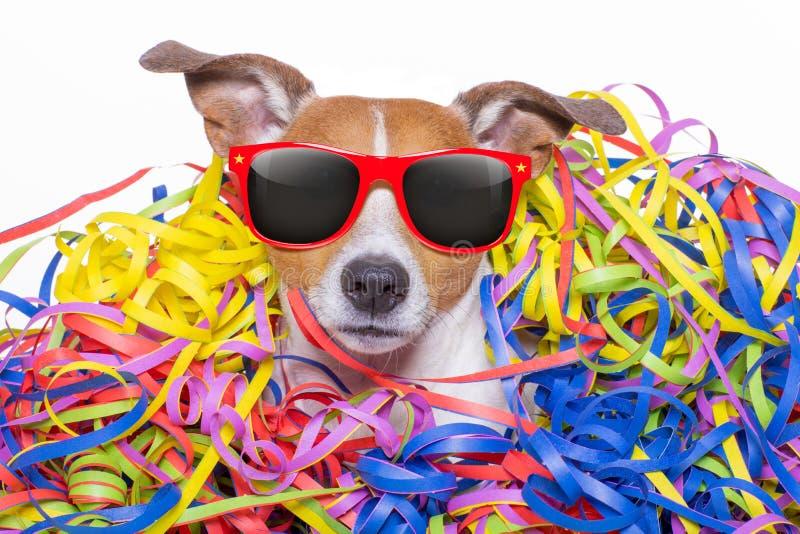 Celeberation do cão do feliz aniversario fotografia de stock royalty free