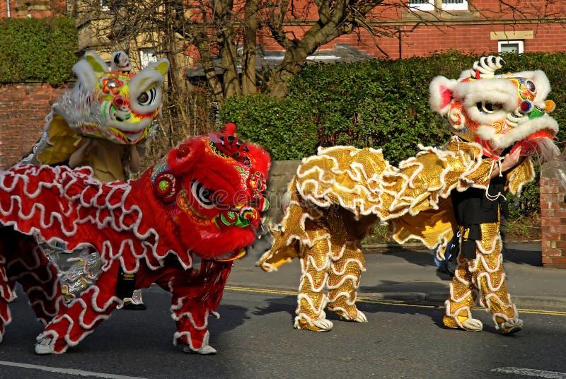 Celebrações de Lion Dancing Chinese New Year em Blackburn Inglaterra fotografia de stock royalty free