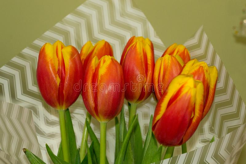 Celebraiting international women`s day, mother`s day and birthday. Closeup red tulip on blurred bouquet background in wrapper. royalty free stock image