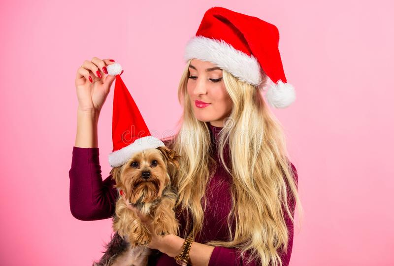 Celebrate christmas with pets. Reason love christmas with pets. Have fun. Pet safety during christmas. Woman and. Yorkshire terrier wear santa hat. Girl royalty free stock image