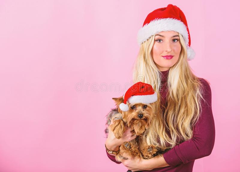 Celebrate christmas with pets. Reason love christmas with pets. Ways to have merry christmas with pets. Girl attractive. Blonde hold dog pet pink background stock images