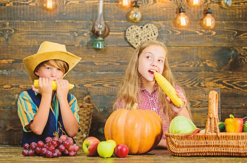 Celebrate harvest festival. Children play corncobs vegetables wooden background. Kids girl boy celebrate harvest. Festival rustic style. School festival holiday stock photos