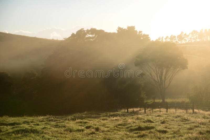 Celebrating Dawn royalty free stock images