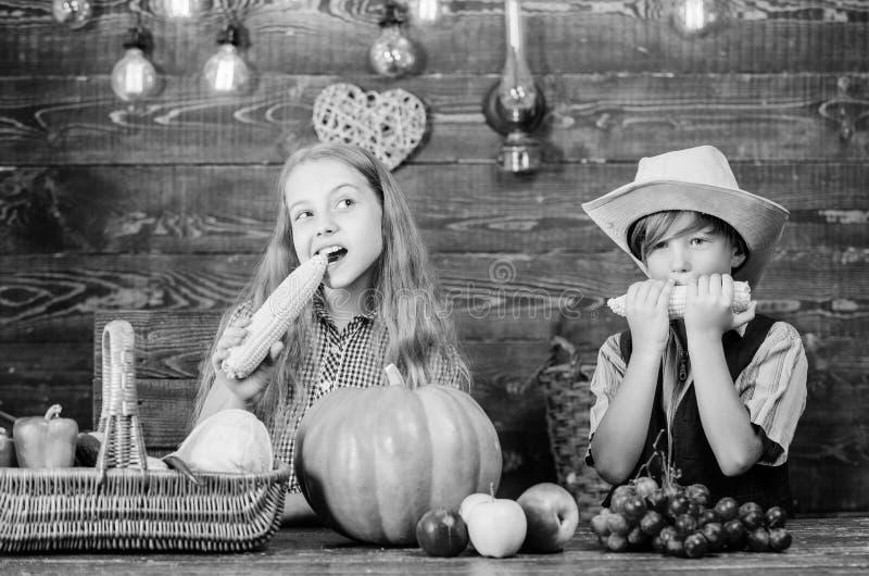 Celebri il festival del raccolto Fondo di legno delle verdure delle pannocchie del gioco di bambini Il ragazzo della ragazza dei  fotografia stock libera da diritti