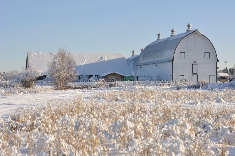 Celeiro de leiteria histórico no campo da desnatadeira no inverno fotos de stock