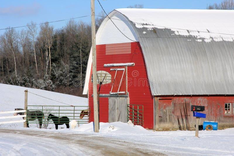 Celeiro de Vermont com cavalos foto de stock