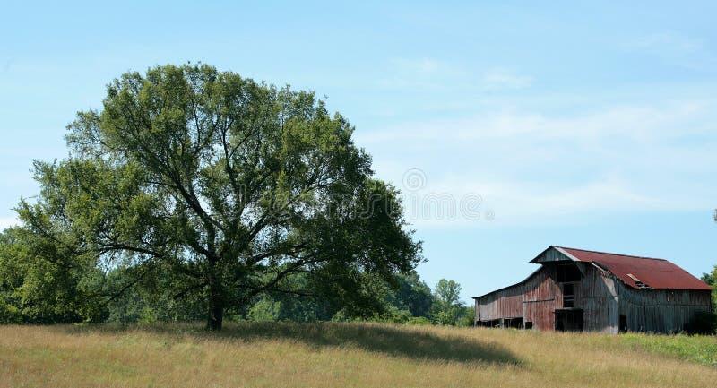 Celeiro e árvore fotos de stock royalty free