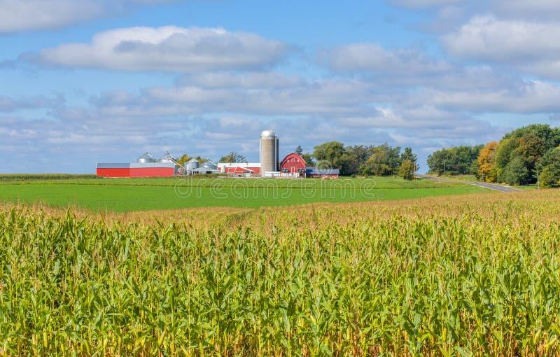 Celeiro e construções vermelhos com primeiro plano do campo de milho foto de stock royalty free