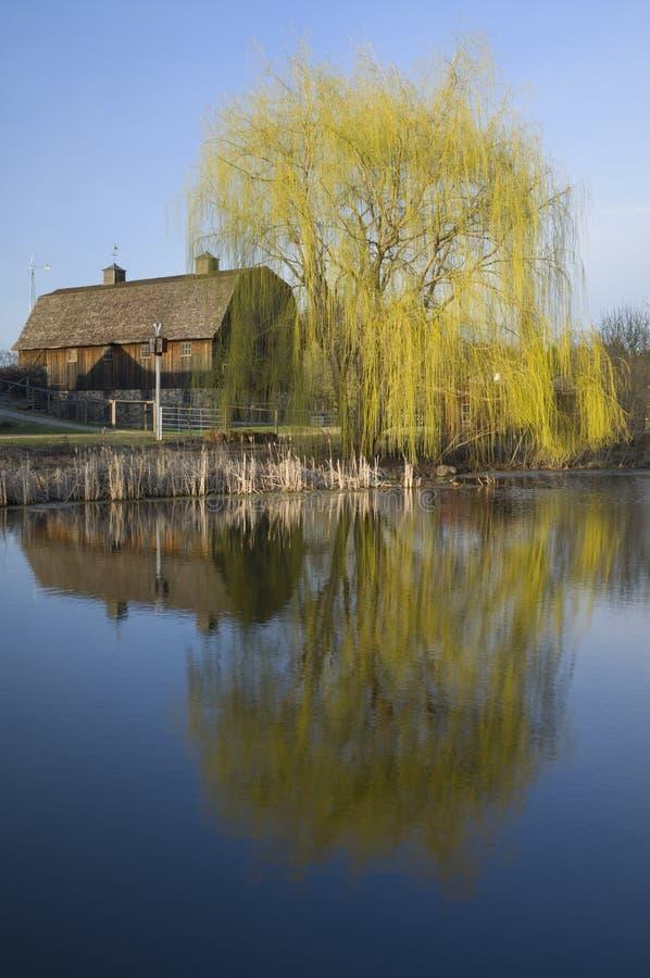 Celeiro e Willow Tree na lagoa imagens de stock