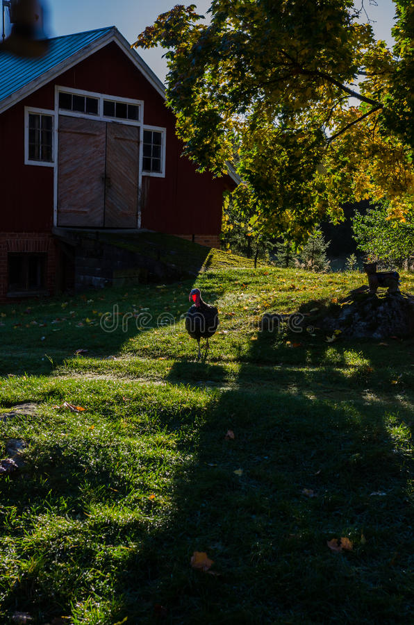 Celeiro finlandês tradicional velho imagens de stock