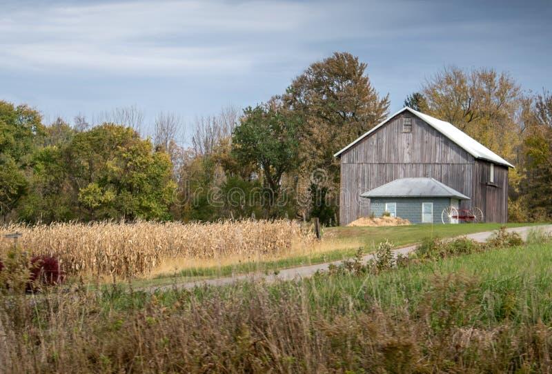 Celeiro pequeno puro ao longo do lado um campo de milho imagem de stock
